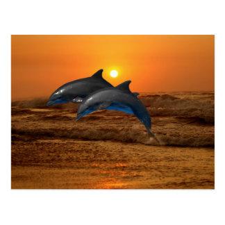 Dauphins au coucher du soleil cartes postales