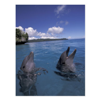 Dauphins de Bottlenose de la Micronésie, Palaos Cartes Postales
