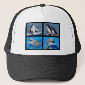 Dauphins et épaulards casquette