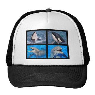 Dauphins et épaulards casquettes de camionneur