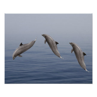 Dauphins Posters
