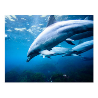 Dauphins sous-marins carte postale