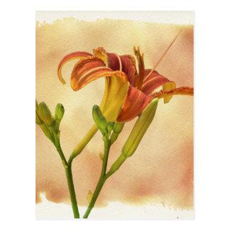 Daylilies - Hemerocallis Carte Postale