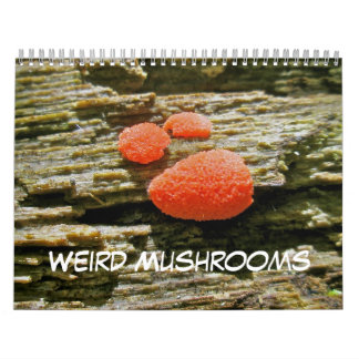 De champignons étranges de calendrier