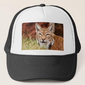 De chat sauvage fin casquette