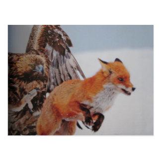 De lutte de renard d'aigle carte postale