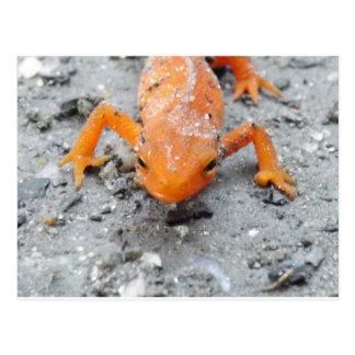 De salamandre carte postale étroite