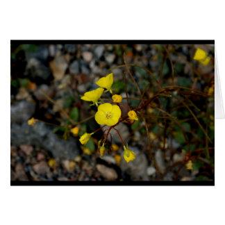 Death Valley fleurit la carte de note