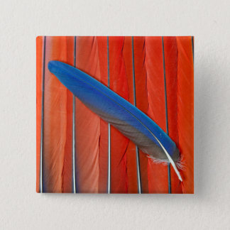 D'écarlate d'ara de plume toujours la vie rouge badges