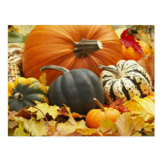 Décoration d'octobre carte postale