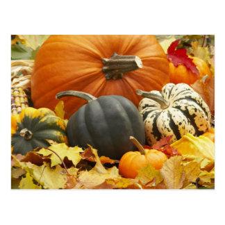 Décoration d'octobre cartes postales