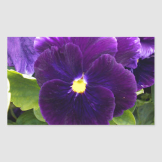 Deep_Purple_Pansy, _ Sticker Rectangulaire