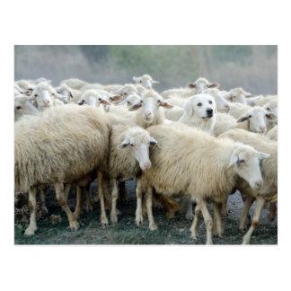 Défi à être différent ! Chien de berger indiquant… Cartes Postales