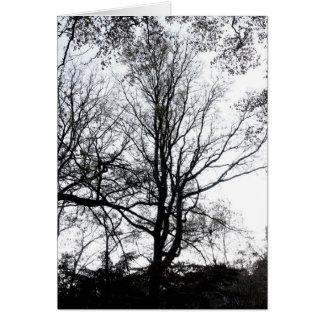 Défunt arbre presque stérile B&W d'automne de Carte De Vœux