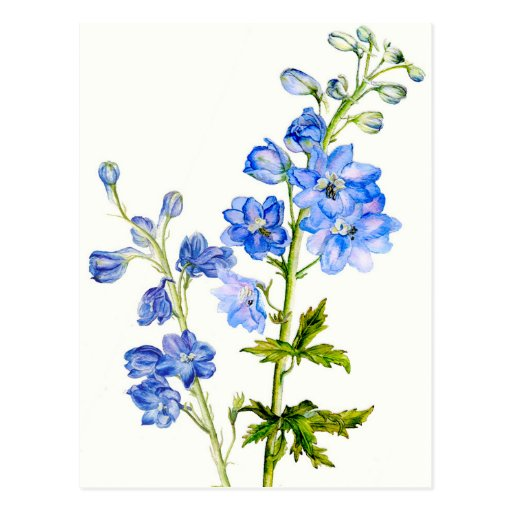 Delphiniums bleus en carte postale d'aquarelle