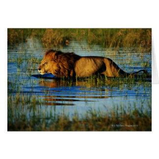 Delta d'Okavango, Botswana 3 Carte De Vœux