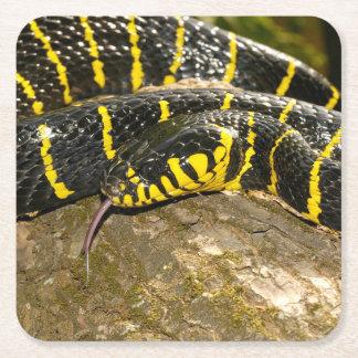Dendrophila de Boiga ou serpent de palétuvier Dessous-de-verre Carré En Papier