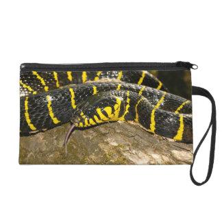 Dendrophila de Boiga ou serpent de palétuvier Sacs À Main Avec Dragonne