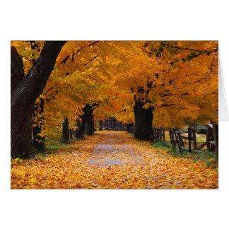 Descendre le chemin de la mémoire de l'automne carte de vœux
