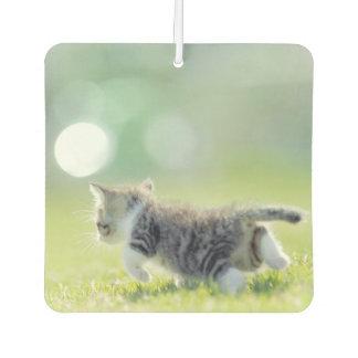 Désodorisant Pour Voiture Chat de bébé fonctionnant sur le champ d'herbe