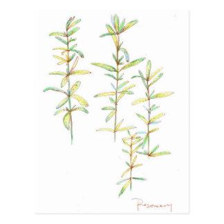 Dessin botanique d'art d'usine de fines herbes de cartes postales