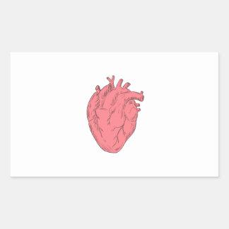 Coeur humain autocollants stickers coeur humain - Dessin du coeur humain ...