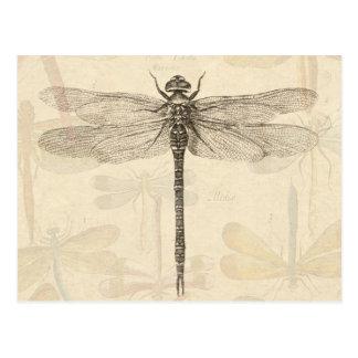 Dessin vintage de libellule cartes postales