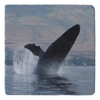 Dessous-de-plat violation de baleine de bosse