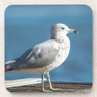 Dessous-de-verre Appelez-moi M.Seagull