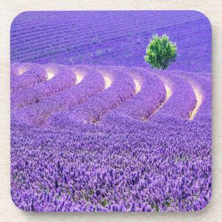 Dessous-de-verre Arbre solitaire dans le domaine de lavande, France