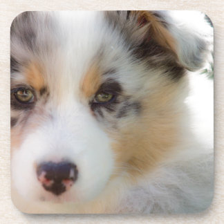 Dessous-de-verre Australian shepherd puppy