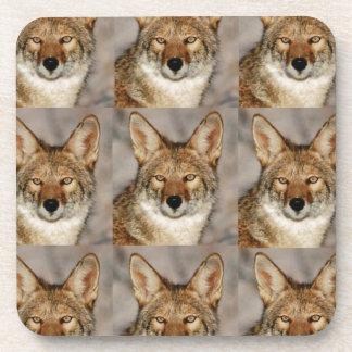 Dessous-de-verre boîtes de coyotes