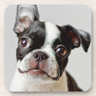 Dessous-de-verre Boston Terrier
