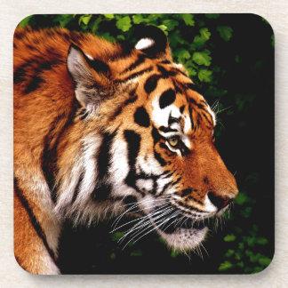 Dessous-de-verre Chat sauvage de tigre magnifique