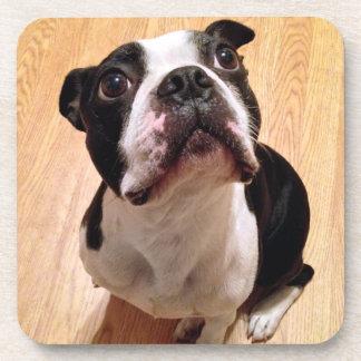 Dessous-de-verre Chien de Boston Terrier