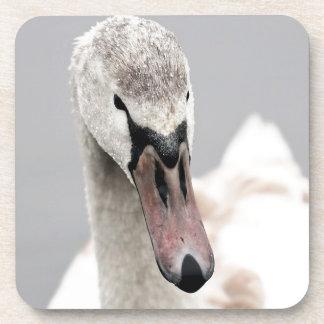 Dessous-de-verre Cygne fier d'être un oiseau d'eau de fierté de