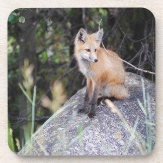 Dessous de verre de boisson de renard rouge