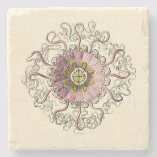 Dessous de verre de Haeckel Peromedusa Dessous-de-verre En Pierre