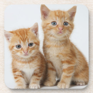 Dessous-de-verre Deux chatons adorables