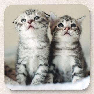 Dessous-de-verre Deux chatons mignons