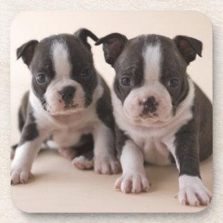 Dessous-de-verre Deux chiots de Boston Terrier