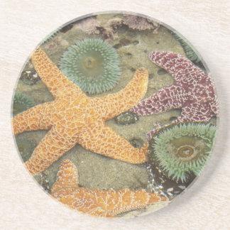 Dessous De Verre En Grès Anémones vertes géantes et étoiles de mer ocres