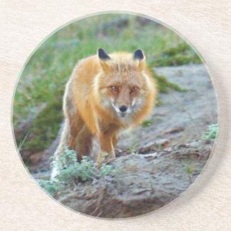 Dessous De Verre En Grès Art sauvage de photo de faune de renarde de Fox