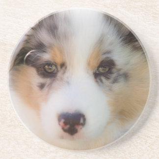 Dessous De Verre En Grès Australian shepherd puppy