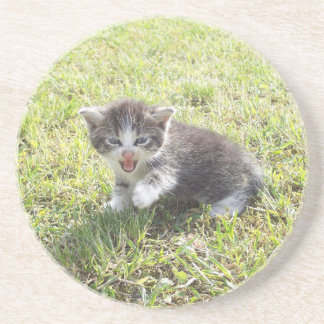 Dessous De Verre En Grès Ce chaton lutte pour la liberté