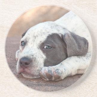 Dessous De Verre En Grès Chiot du Staffordshire Terrier américain se