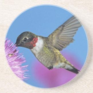 Dessous De Verre En Grès colibri Rubis-throated, Archilochus 4