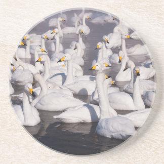 Dessous De Verre En Grès Cygnes de Whooper, Hokkaido, Japon