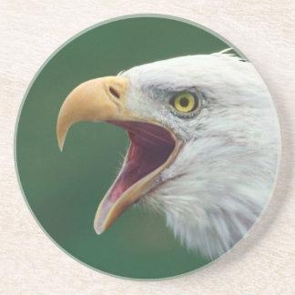 Dessous De Verre En Grès Eagle chauve (leucocephalus de Haliaeetus)