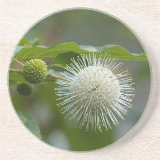 Dessous De Verre En Grès Fleur sauvage blanc de Buttonbush